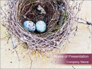 Nest With Blue Eggs PowerPoint Templates