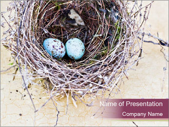 Nest With Blue Eggs PowerPoint Template - Slide 1
