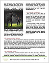0000088518 Word Templates - Page 4