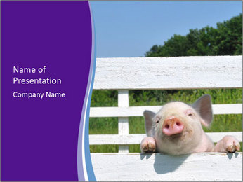 Funny Pink Piggy PowerPoint Template - Slide 1