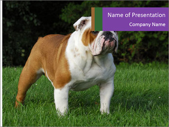 English bulldog standing in the grass PowerPoint Template - Slide 1