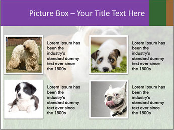English bulldog standing in the grass PowerPoint Template - Slide 14