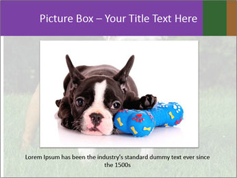 English bulldog standing in the grass PowerPoint Template - Slide 15