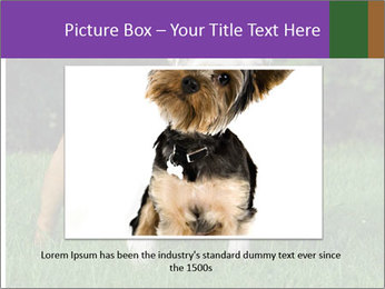 English bulldog standing in the grass PowerPoint Template - Slide 16