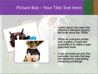 English bulldog standing in the grass PowerPoint Template - Slide 20