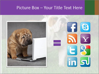 English bulldog standing in the grass PowerPoint Template - Slide 21