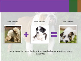 English bulldog standing in the grass PowerPoint Template - Slide 22