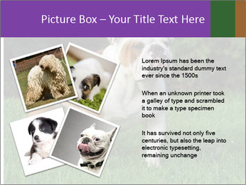 English bulldog standing in the grass PowerPoint Template - Slide 23