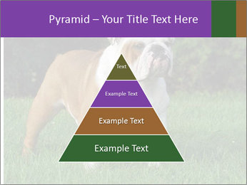 English bulldog standing in the grass PowerPoint Template - Slide 30