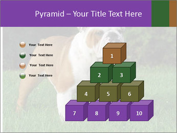 English bulldog standing in the grass PowerPoint Template - Slide 31