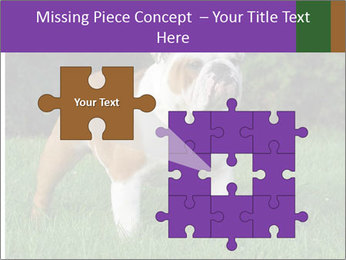 English bulldog standing in the grass PowerPoint Template - Slide 45