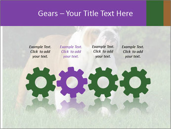 English bulldog standing in the grass PowerPoint Template - Slide 48