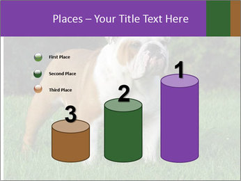 English bulldog standing in the grass PowerPoint Template - Slide 65