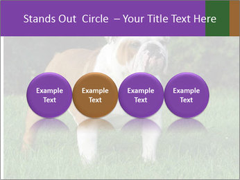 English bulldog standing in the grass PowerPoint Template - Slide 76