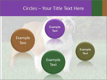 English bulldog standing in the grass PowerPoint Template - Slide 77