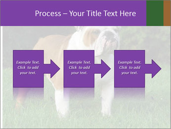 English bulldog standing in the grass PowerPoint Template - Slide 88