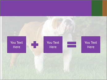 English bulldog standing in the grass PowerPoint Template - Slide 95
