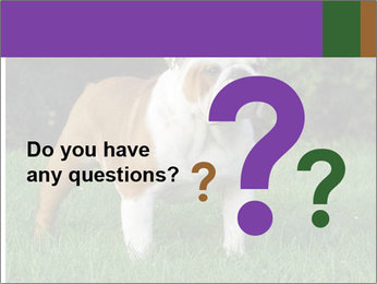 English bulldog standing in the grass PowerPoint Template - Slide 96
