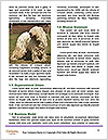 0000088544 Word Templates - Page 4