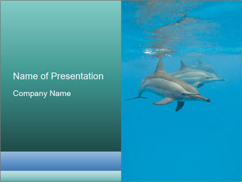 Schooling Spinner dolphins Red Sea, Egypt PowerPoint Template - Slide 1