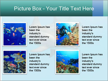 Schooling Spinner dolphins Red Sea, Egypt PowerPoint Template - Slide 14