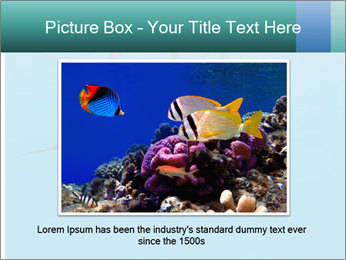 Schooling Spinner dolphins Red Sea, Egypt PowerPoint Template - Slide 15
