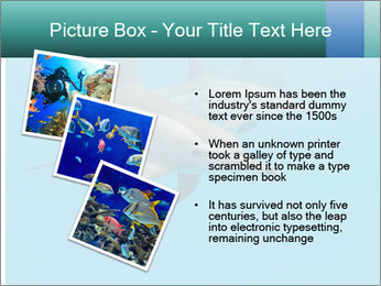Schooling Spinner dolphins Red Sea, Egypt PowerPoint Template - Slide 17