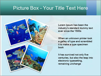 Schooling Spinner dolphins Red Sea, Egypt PowerPoint Template - Slide 23