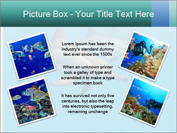 Schooling Spinner dolphins Red Sea, Egypt PowerPoint Template - Slide 24