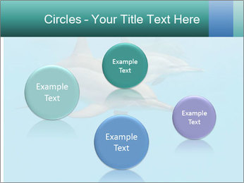 Schooling Spinner dolphins Red Sea, Egypt PowerPoint Template - Slide 77