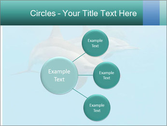 Schooling Spinner dolphins Red Sea, Egypt PowerPoint Template - Slide 79