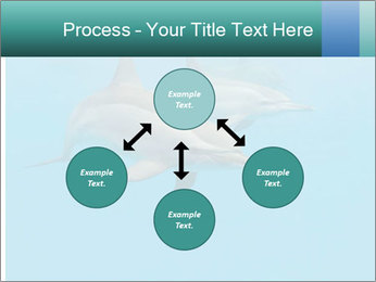 Schooling Spinner dolphins Red Sea, Egypt PowerPoint Template - Slide 91