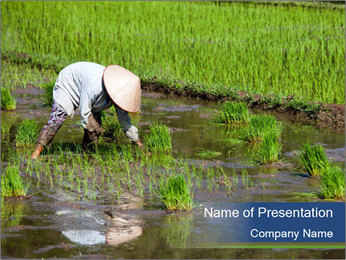 Rice Planting PowerPoint Templates - Slide 1