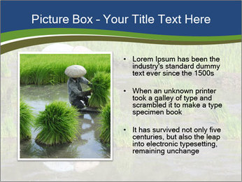 Rice Planting PowerPoint Templates - Slide 13