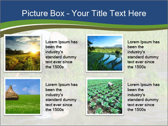 Rice Planting PowerPoint Templates - Slide 14