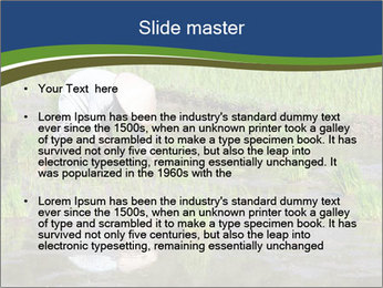 Rice Planting PowerPoint Templates - Slide 2