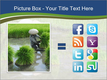 Rice Planting PowerPoint Templates - Slide 21