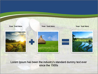 Rice Planting PowerPoint Templates - Slide 22