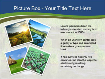 Rice Planting PowerPoint Templates - Slide 23