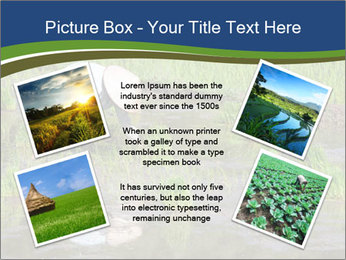 Rice Planting PowerPoint Templates - Slide 24