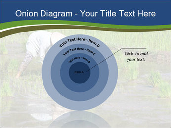 Rice Planting PowerPoint Templates - Slide 61