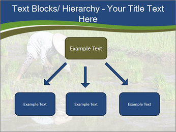 Rice Planting PowerPoint Templates - Slide 69