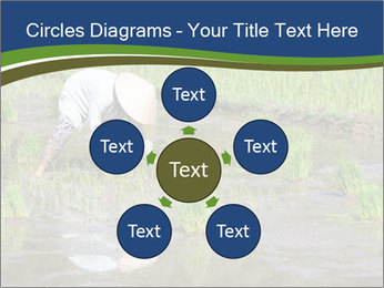 Rice Planting PowerPoint Templates - Slide 78