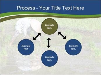 Rice Planting PowerPoint Templates - Slide 91