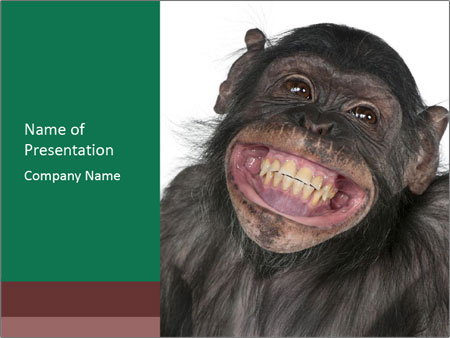 Monkey between Chimpanzee and Bonobo smiling PowerPoint Templates