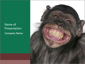 Monkey between Chimpanzee and Bonobo smiling PowerPoint Templates - Slide 1