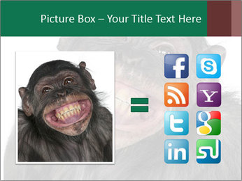Monkey between Chimpanzee and Bonobo smiling PowerPoint Templates - Slide 21