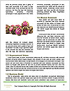 0000088597 Word Template - Page 4