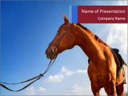 Saddled Horse PowerPoint Templates