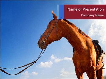 Saddled Horse PowerPoint Template - Slide 1